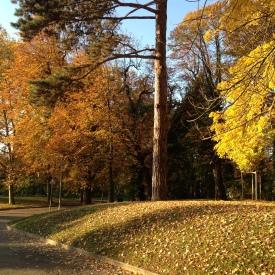 Des arbres en plein d'automne au dehors du logement étudiant.