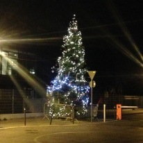The Christmas tree outside the school - there are massive Christmas trees on all the big squares in Carouge.