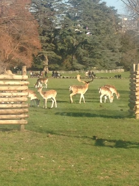 Close up of the deer. The stag obviously knew I was taking a photo and posed appropriately.