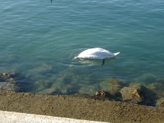 And a headless swan...